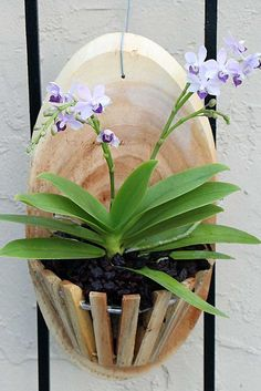 Wood basket for orchid Orchid Planters, Orchids Garden, Diy Planters, Potted Garden, Orchid Supplies, Hanging Orchid, Orchid Roots, Orquideas Cymbidium, Rare Orchids