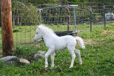 Unicorn / Horse baby. Albino. =)