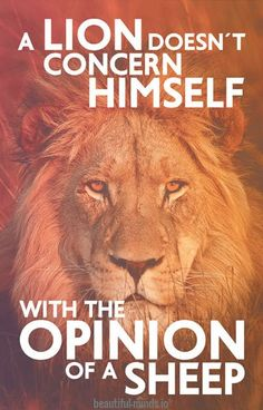 the lion doesn't concern himself with the opinions of the sheep - Google Search