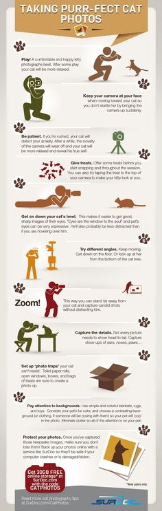 7 Steps to Taking Purfect Cat Photos [INFOGRAPHIC] | Awesome Infographics | Scoop.it