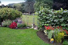 Summer 2011 gardening yard and junk photos trimmed flowerbed edges / part of summer garden reveal on Flower Bed Edging, Flower Beds, Diy Flower, Lawn Edging, Garden Edging, Garden Paths, Landscaping With Rocks, Front Yard Landscaping, Landscaping Ideas