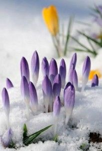 Top five tips for gardening during the winter.