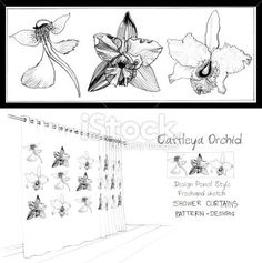 #Curtain #shower #decor #restroom #product #design #pattern #Vanda #Cattleya #Orchid #flower #pencil #sketch ,............................... My Photo #Cartoon #Graphic #Microstock you can buy file copy right very cheap here.  1.shutter stock ( http://www.shutterstock.com/cat.mhtml?gallery_id=610918 ) 2.istockphoto ( http://www.istockphoto.com/portfolio/silamime#8f40580 ) 3.123rf  ( http://www.123rf.com/portfolio/silamime/1.html ) 4.dreamstime ( http://www.dreamstime.com/silamime_info )…