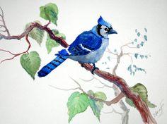 Blue Jay original watercolor painting 9 X 12 by OriginalArtOnly, 24.00