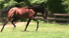 Beautiful graceful arab horse in motion..