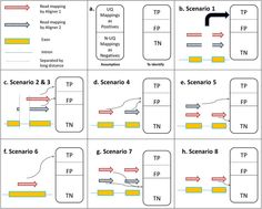 CADBURE – A generic tool to evaluate the performance of spliced aligners on RNA-Seq data - The fundamental task in RNA-Seq-based transcriptome analysis is alignment of millions of short reads to the reference genome or transcriptome. Choosing the right tool for the dataset in hand from many existent RNA-Seq alignment packages remains a critical challenge for downstream analysis. To facilitate this choice, researchers from Miami University designed a novel tool for comparing alignment…