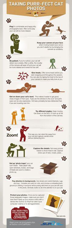 7 Steps to Taking Purfect Cat Photos [INFOGRAPHIC] | Le photographe numérique | Scoop.it #CatPhotography