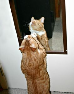 He doesn't need a mirror to know he's beautiful.   Mr. Magoo: The Blind Cat Who Defied All Odds