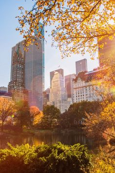 Everything to Do for Free in NYC This Fall - Trips to NYC aren't the most bank account-friendly, what with gourmet dining, ultra-luxe accommodations and high-end shopping pulling at your purse strings.  To save you some cash (the holidays are coming up, if you can believe it!), we've rounded up the city's best fall freebies.