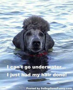 Alright, stay afloat! #dogs #pets #Poodles Facebook.com/sodoggonefunny 09/20/2014