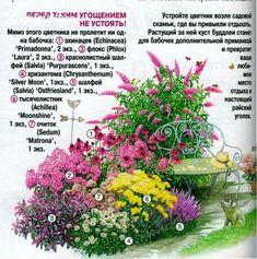 Vivaces | Entrées dans la catégorie Vivaces | Blog Pelagey: LiveInternet - service russe Diaries en ligne