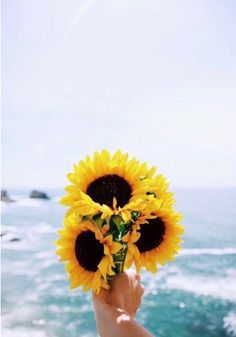 Sunflower sea sunshine discovered by GreenKiwy Sunflower sea sunshine discovered by GreenKiwy Kat kkateelvira Wall Image uploaded by GreenKiwy. Find images and videos about summer blue […] backgrounds aesthetic sunflower Sunflower Wallpaper, Jolie Photo, Mellow Yellow, Aesthetic Wallpapers, Cute Wallpapers, Hd Wallpaper, Pretty Pictures, Planting Flowers, Beautiful Flowers