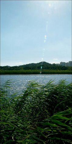 안산,화랑호수,갈대 Korea