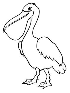 Pelican Bird Coloring Page Picture