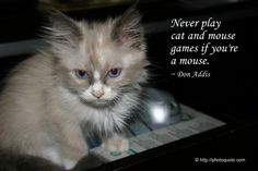 beautiful cat quotes | Sayings, Quotes: Don Addis