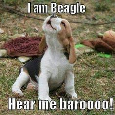 Love my mommy Kelsey ----- Also, click on the image to check out our exclusive Beagles t-shirt today! All sizes available in different colors. It's only $16.94 & available for a limited time on Amazon.com                                                                                                                                                      More