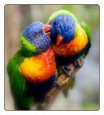 birds birds birds