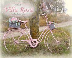 pink bicycle, roosa polkupyörä & kukkia, rosa cyclen & blommor