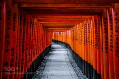 Fushimi Inari Taisha Kyoto Japan by HendrikvanZwol  city travel architecture temple japan kyoto asia buddhism shrine HendrikvanZwol