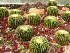 jardín con cactus y piedras rojizas