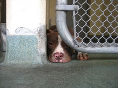 http://www.southdadenewsleader.com/news/miami-dade/article_b865d2a4-0075-11e4-94a9-0017a43b2370.html County Reduces Pet Adoption Fees for July