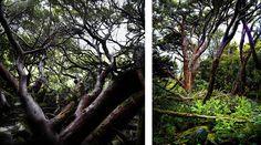 Kim Sokola is an award winning photographer. Mount Cook, Earth, Landscape, Plants, Scenery, Landscape Paintings, Planters, Corner Landscaping, Plant