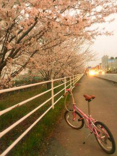 ©アルちゃんさま / ボートウォーク / 明日から嵐になるという天気予報で、あわてて桜サイクリングへいってきました。ピンクのダホンとサクラのコントラストが最高に可愛いです。