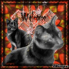 Welcome to my circle of friends Circle Of Friends, Sweet Kisses, Cute Love Pictures, Beautiful Love, Friend Pictures, Cool Cats, Photo Editor, Welcome, Illusions