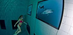 A freediver without fins observes the exhibition of Fred Buyle in Nemo33, image by Joost van Uffelen