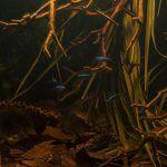 Building a Biotope: A Step-by-Step Rio Negro Aquarium