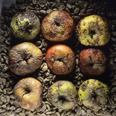 Rotten apples by Bernard Jaubert Rotten Food, Rotten Fruit, Close Up Photography, Fine Art Photography, Food Art Painting, Watercolor Paintings, Billy Kid, Growth And Decay, Colour Story