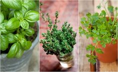 Want to harness the aromatic flavors and healing qualities of herbs in your home, yet were born without a green thumb? Don't worry – many herbs are pretty low maintenance and only require a basic level of care. Here are 13 of the easiest to grow kitchen herbs: 1. Basil Basil is the perfect starter plant for indoor herb gardens. Not only does its pungent…   [read more]