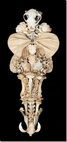 bones...have a beauty all their own...