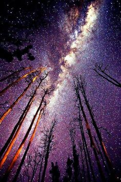 Nature. A Transcendentalist place to go is a place where you can look at the stars. The trees in this picture represent how people reach for the stars. A peaceful and quiet place like this is definitely a transcendentalist location.