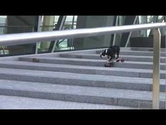Dogs that skateboard. These German Boston Terriers rock!