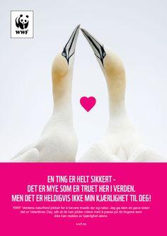 WWF Norway - Støtt WWF