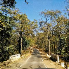Who will get tired of a roadtrip if you get roads like this to drive on... #roadtrip #roadtrippin #travel #travelling #traveller #india #indiatravel #trip #tripindia #road #journey #traveldiaries #ttot #_soi #indiaclicks #journeytoremember #indiaroadtrip #pachmarhi #mp #instatravel #instatraveling #trips #indiaexploregram #desi_diaries #talestreet #explorexstreets #oyemyclick by rovers.odyssey