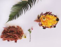 Make your own flower creatures | The Hanna Blog
