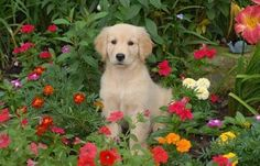 Not sure which is sweeter. That pup or the flowers!
