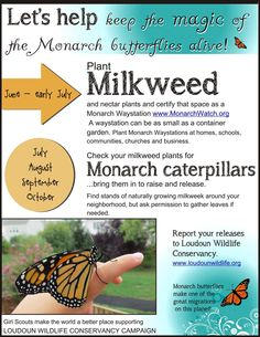 Monarch butterflies, almost time to find some caterpillars. Milkweed is the only plant they eat and lay eggs on. Butterfly Plants, Butterfly House, Monarch Butterfly, Milkweed Plant, Hummingbird Garden, Backyard Garden Design, Landscaping Plants, Garden Inspiration, Garden Ideas