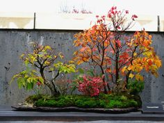 Autumn colors at the NC Arboretum Bonsai Garden, 2011