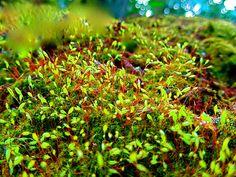 Moss Magic.....