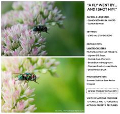 How To Edit Macro Bug Photography With Actions and Presets
