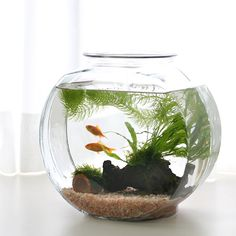 Single-tail goldfish need gallons PER FISH and good filtration. A pond is the best choice for them. They're social fish and should be kept with 2 or more other goldfish. This doesn't provide any of those. Mini Aquarium, Saltwater Aquarium, Aquarium Fish Tank, Saltwater Tank, Fish Home, Beta Fish, Aquarium Design, Garden Terrarium, Fish Ponds