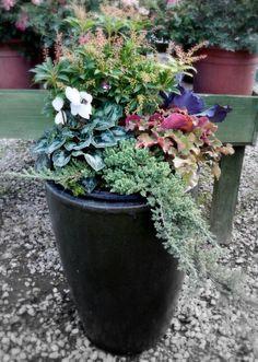 juniper winter container - Google Search