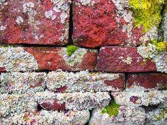 """""""Lichen"""" the colours!"""
