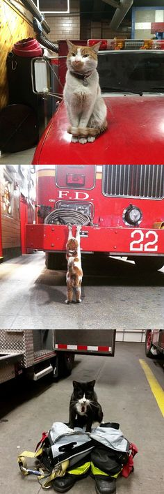 Do yourself a favor and follow these fierce firefighter cats on Instagram.