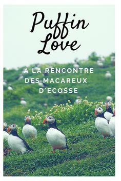 Visitez l'île de May en Ecosse pour être entourés de milliers de macareux et d'autres oiseaux rigolos !