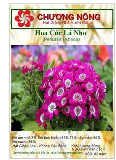 Hạt Giống Chương: Hoa Cúc Lá Nho