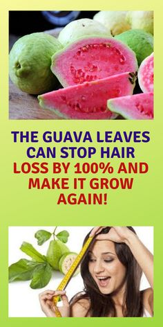 Guava is considered to be a super fruit. Moreover, its leaves are also packed with benefits and they are extremely useful for the hair health. The guava leaves contain all necessary nutrients for h… Natural Remedies For Allergies, Natural Headache Remedies, Natural Remedies For Anxiety, Guava Benefits, Guava Fruit, Guava Leaves, Stop Hair Loss, Healthy Hair Growth, Hair Health